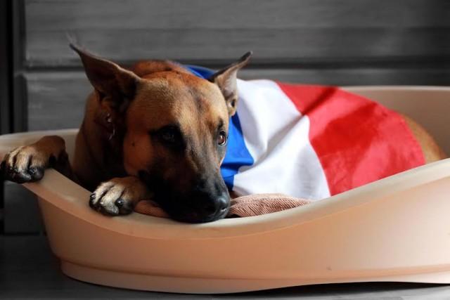 ATTENTATS A PARIS – UNE SOLUTION D'ACCUEIL POUR LEURS ANIMAUX